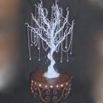 Manzanita tree IMG_4309
