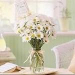 Mason jar - white daisies