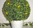 Potted Boxwood Topiary Tree with Lights
